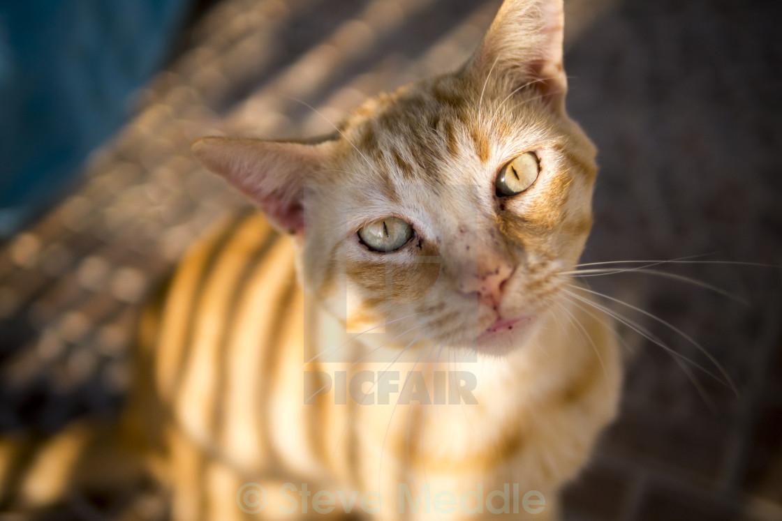 """Ginger Cat"" stock image"