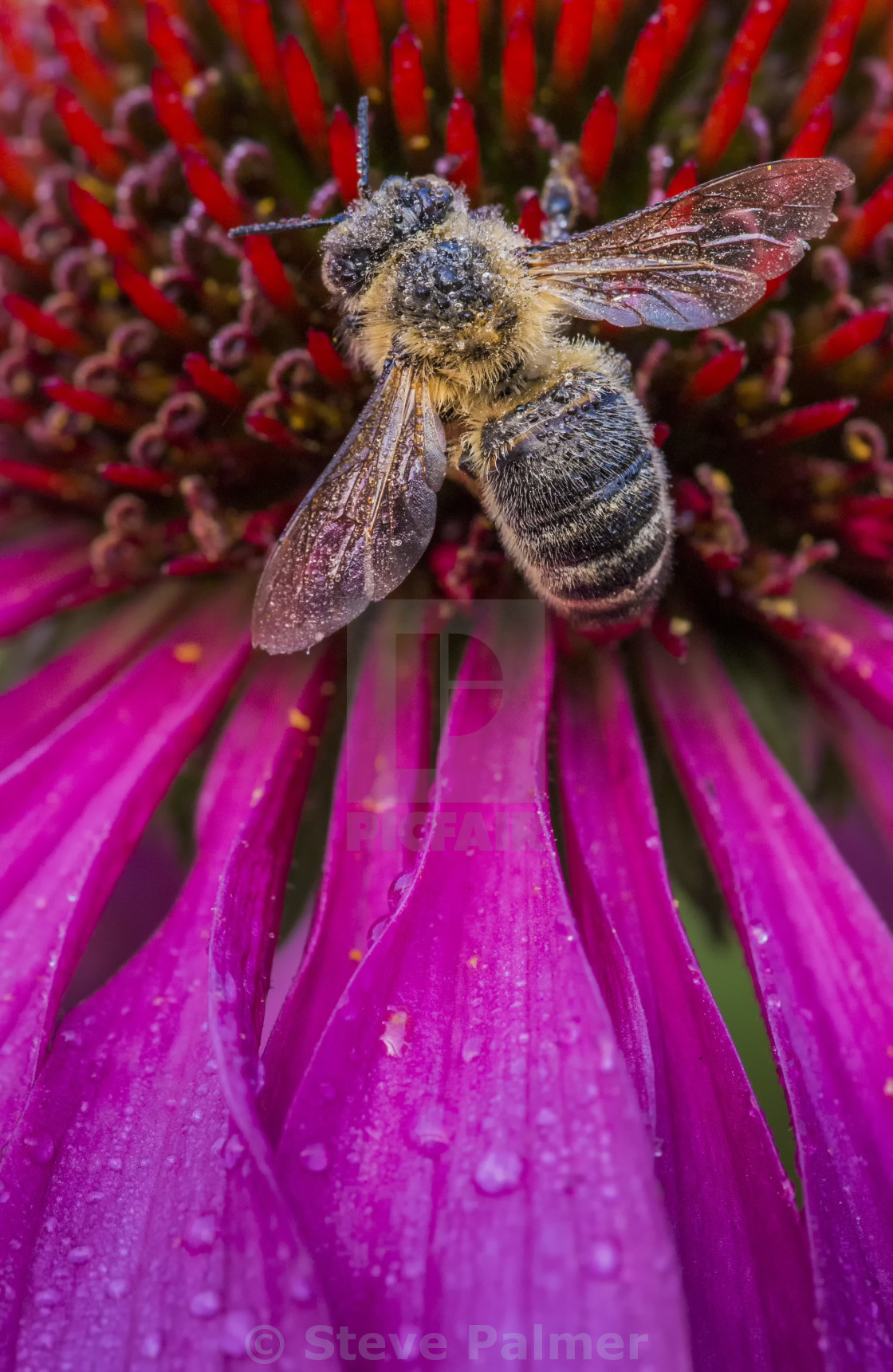 """Resting Bee"" stock image"