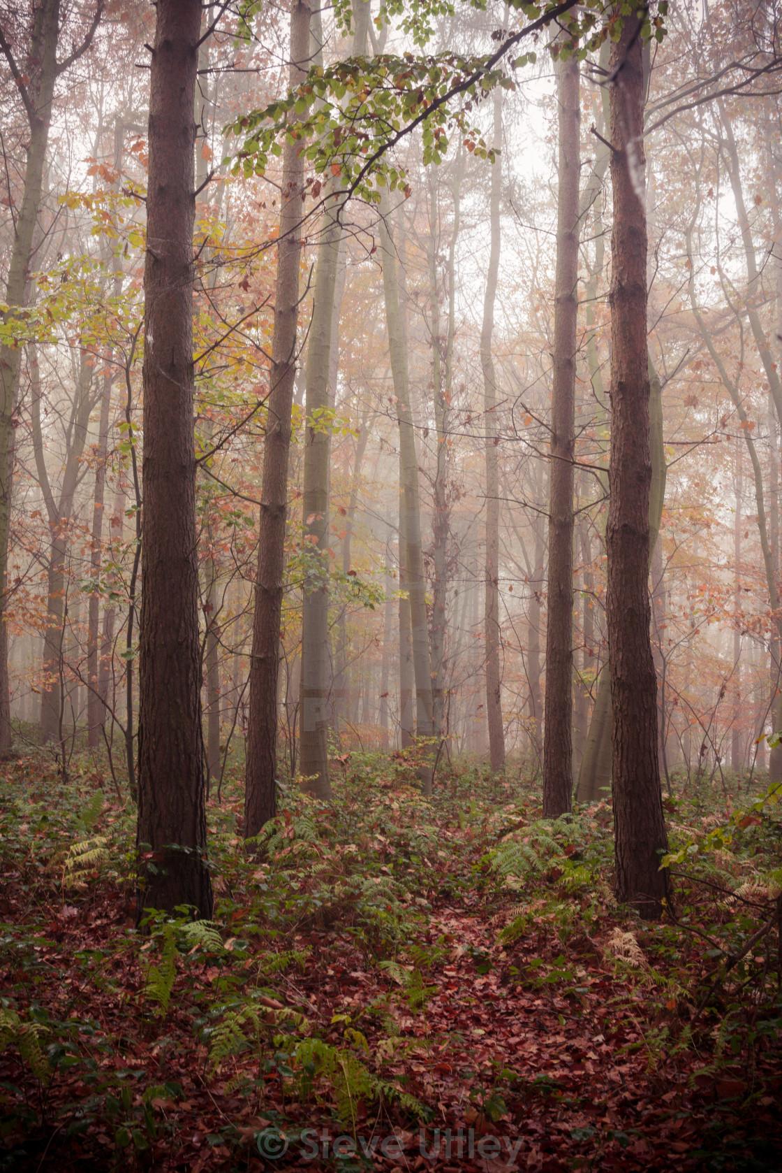 """Nottinghamshire Red Wood"" stock image"
