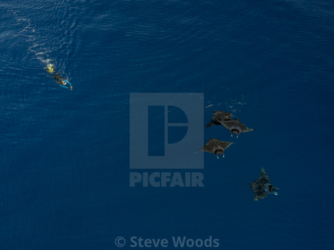 """""""An aerial photograph of a swimmer with a school of Mobula rays in Vava'u, Tonga"""" stock image"""