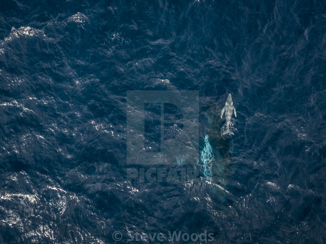 """An aerial photograph of a Humpback Whale (Megaptera novaeangliae) and her..."" stock image"