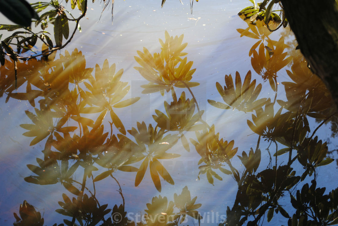 """""""Reflections on the water"""" stock image"""