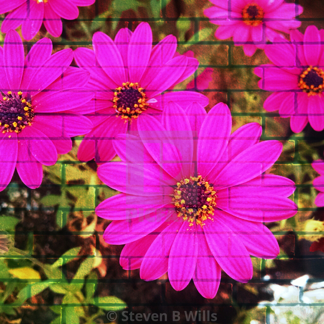 """""""Pink flowers popart"""" stock image"""