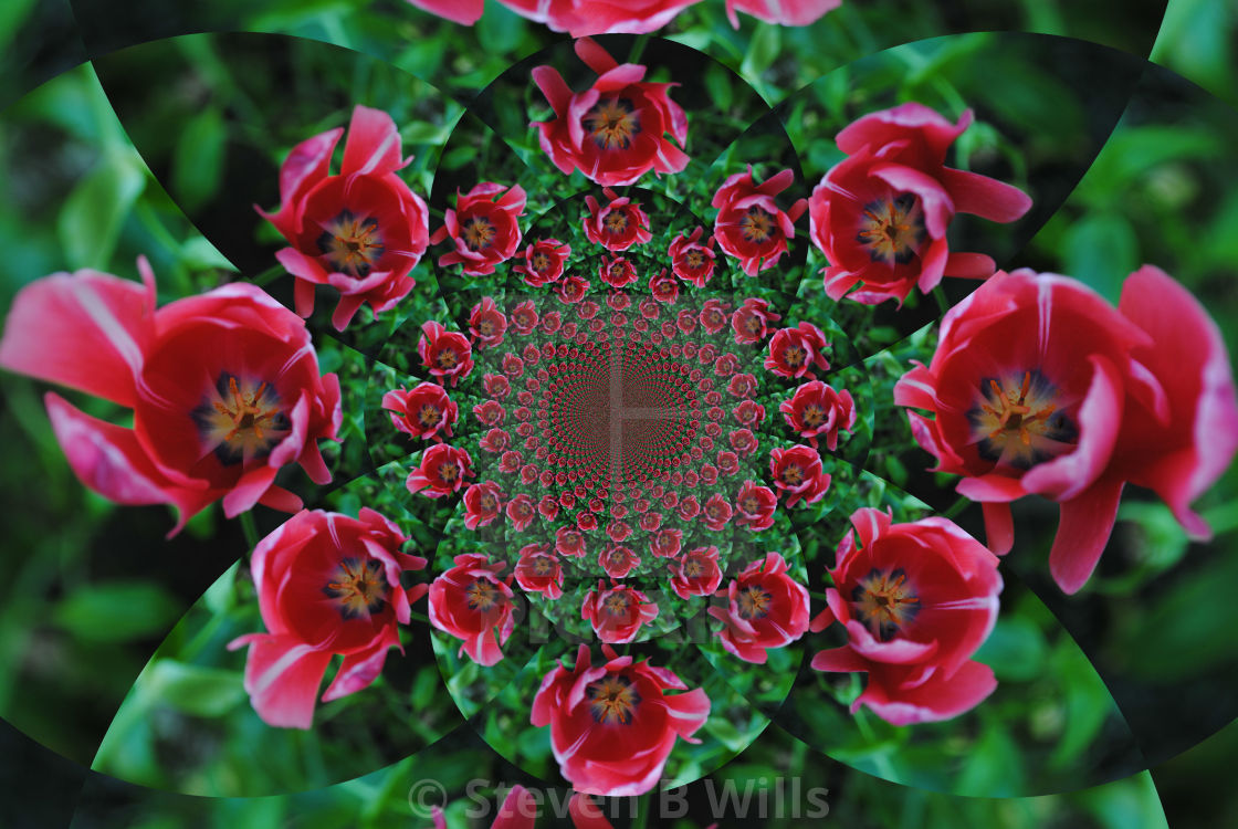 """""""Tulips forever"""" stock image"""