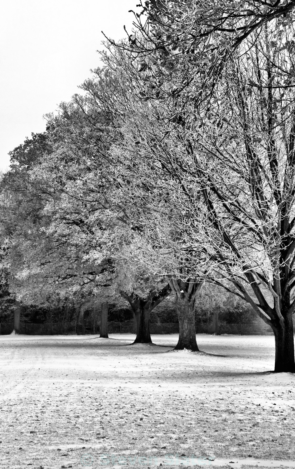 """Winter in Monochrome"" stock image"