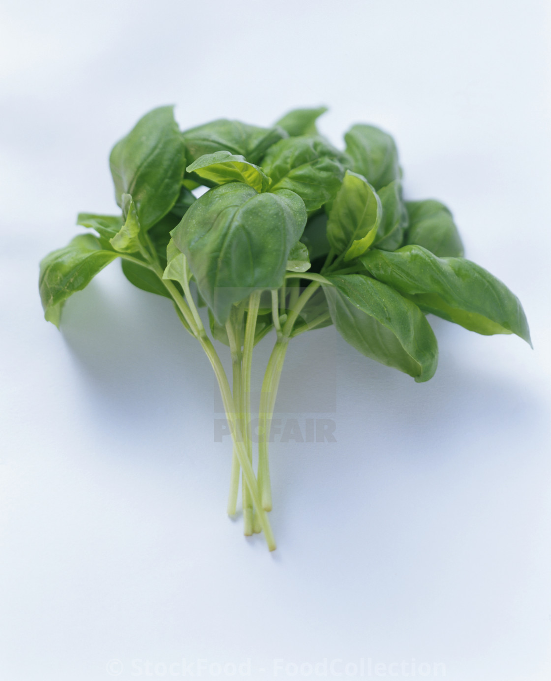 """A Bunch of Basil"" stock image"