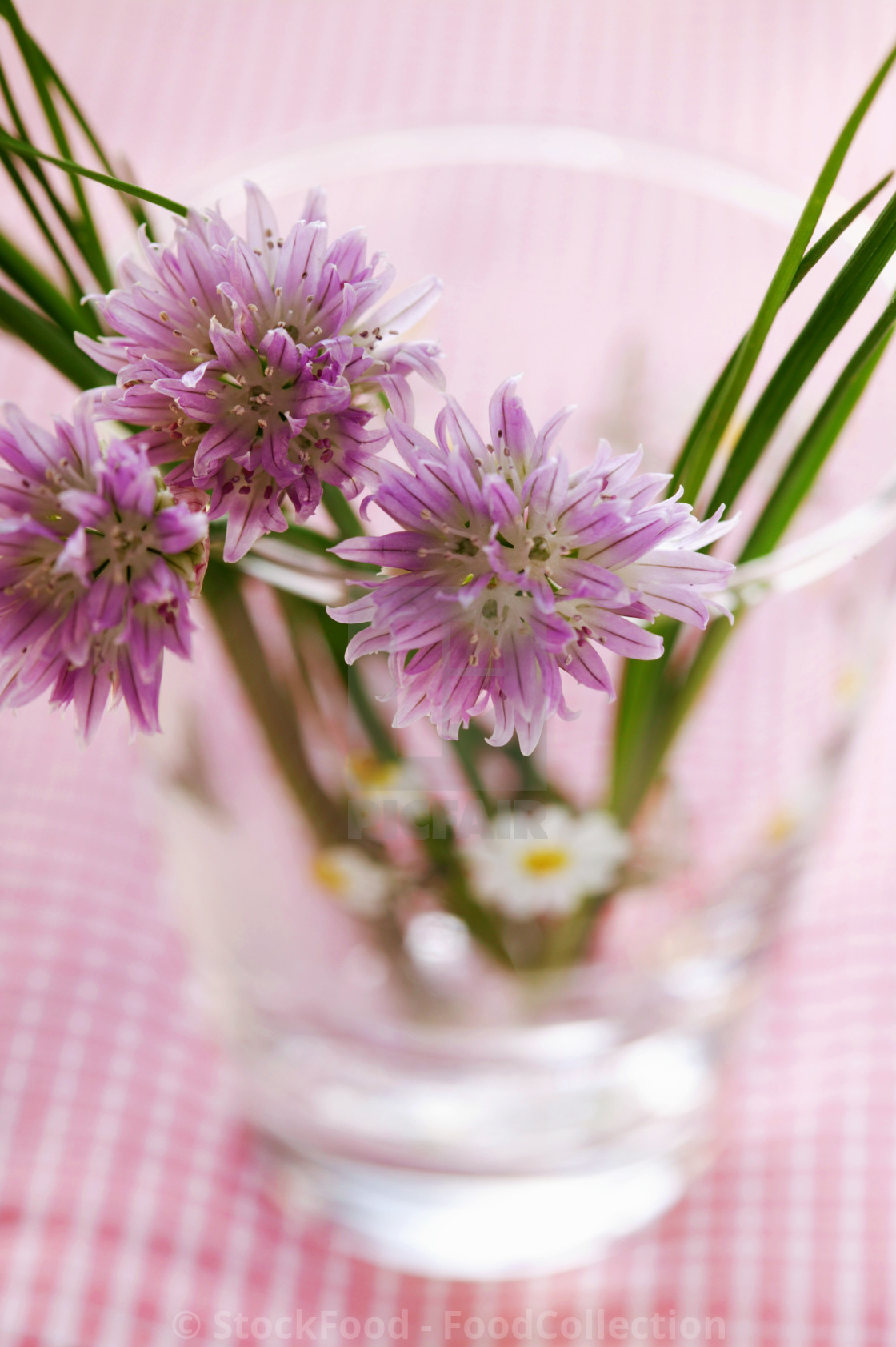 """Fresh chives with flowers"" stock image"