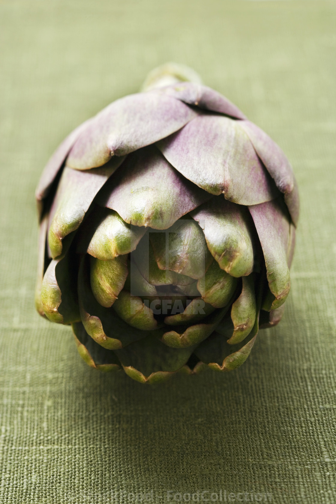 """Fresh Artichoke"" stock image"
