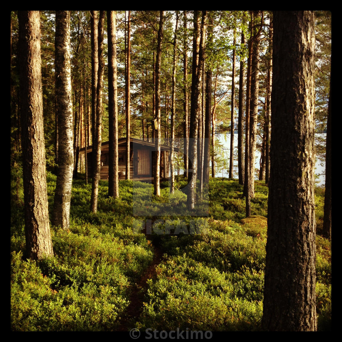 """A wooden hut deep in a wilderness forest..."" stock image"