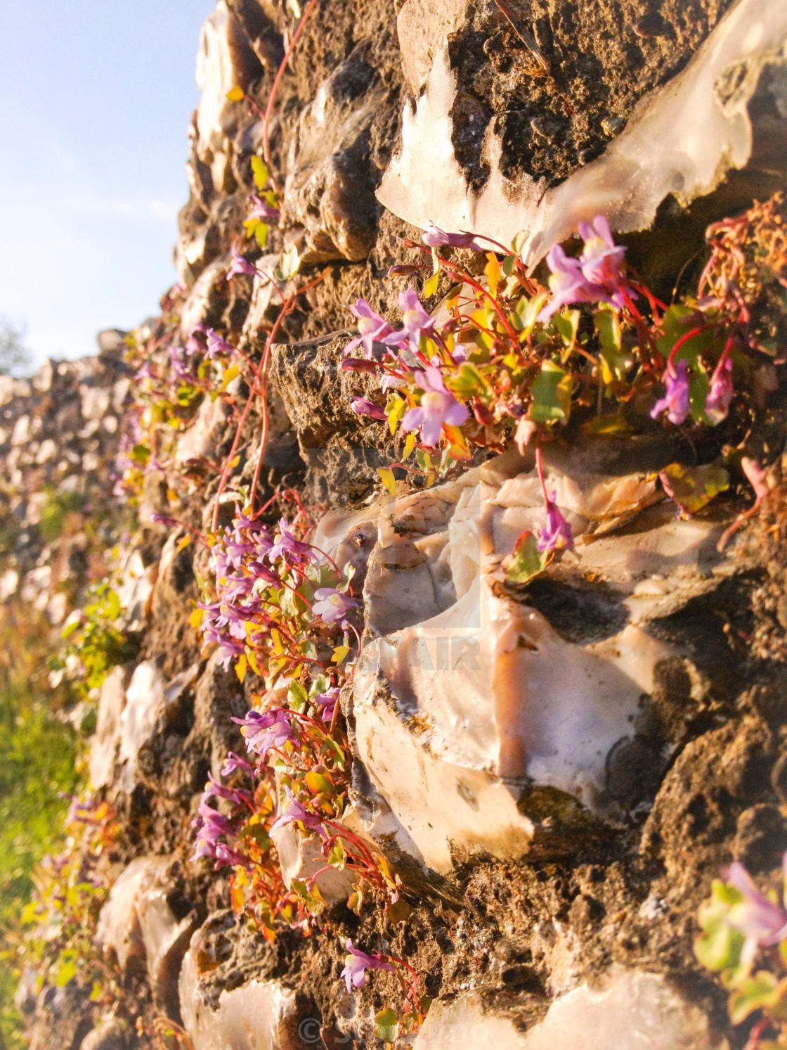 """Flowers in a wall"" stock image"