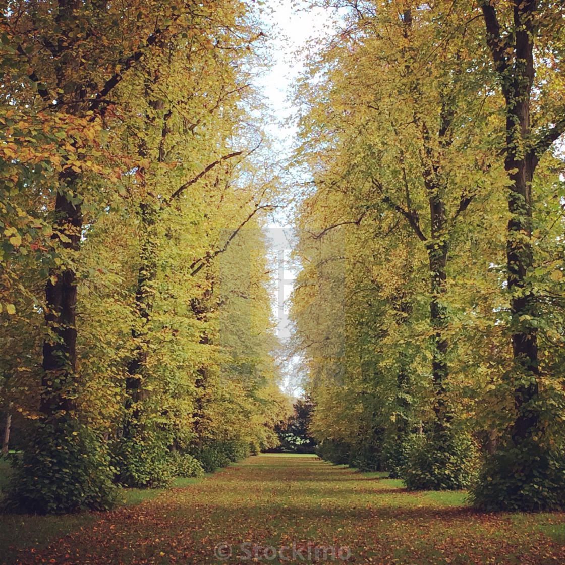 """Lime Tree Avenue"" stock image"