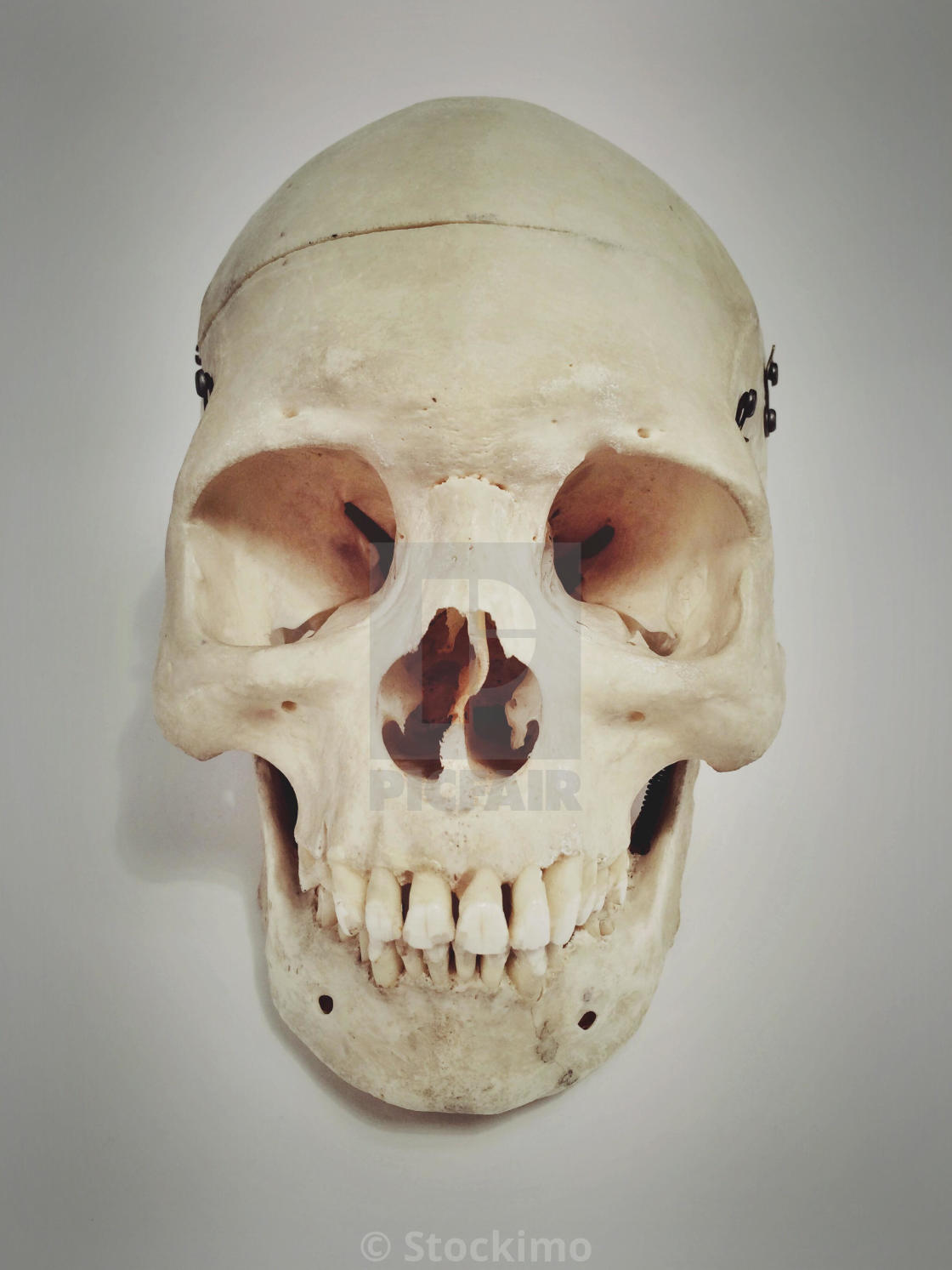 Human Skull Front View License Download Or Print For 3100