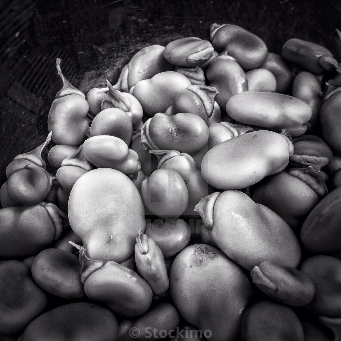 Green lima bean vegetables on black and white license download or