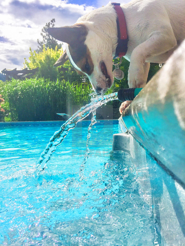 Vereinigte Staaten neue Kollektion Original Dog observing water flowing out of a garden hose next to ...