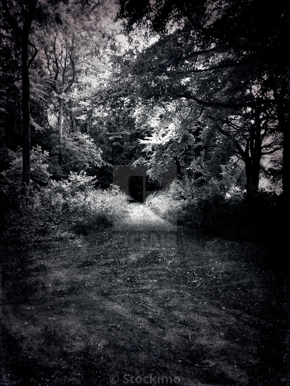 """Spooky woodland tunnel"" stock image"