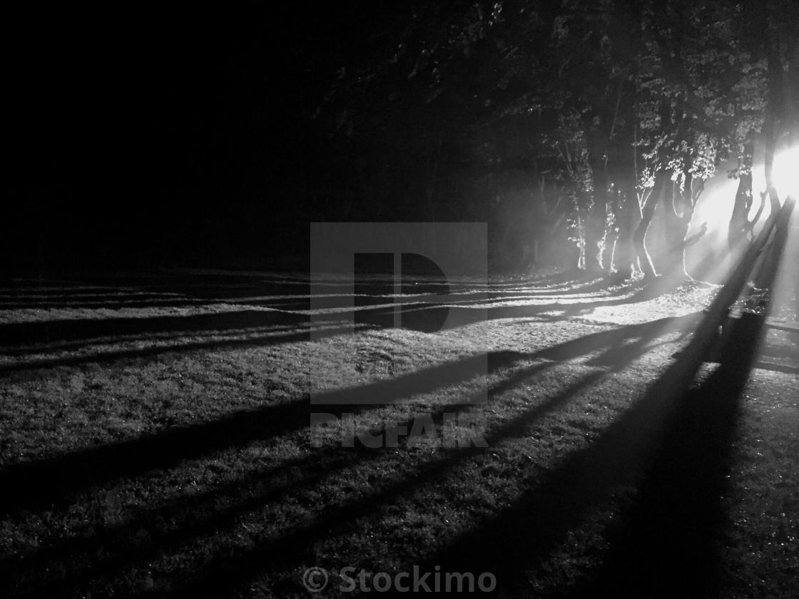 """Spooky trees with shadows"" stock image"