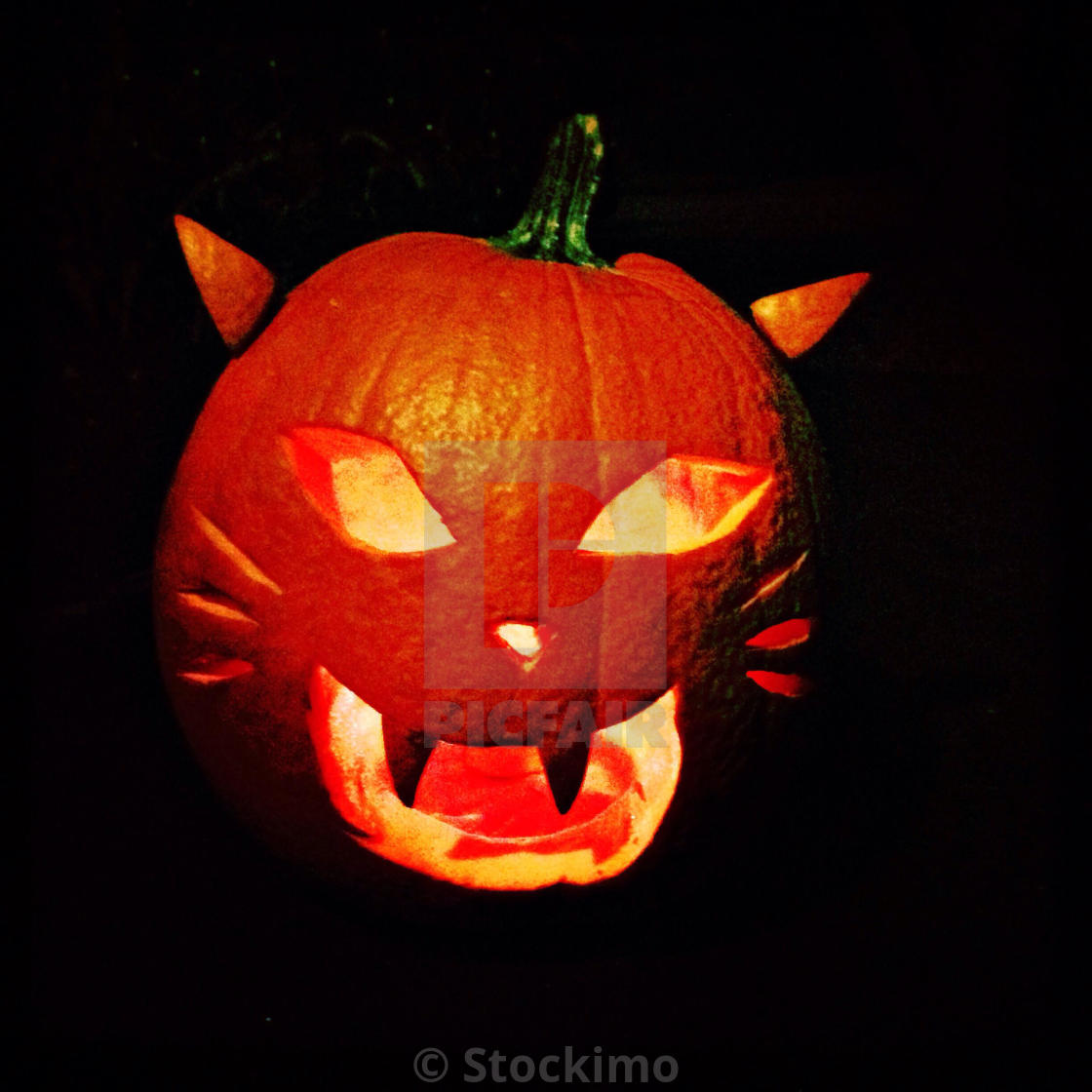 Cat Jack O Lantern License Download Or Print For 31 00 Photos Picfair