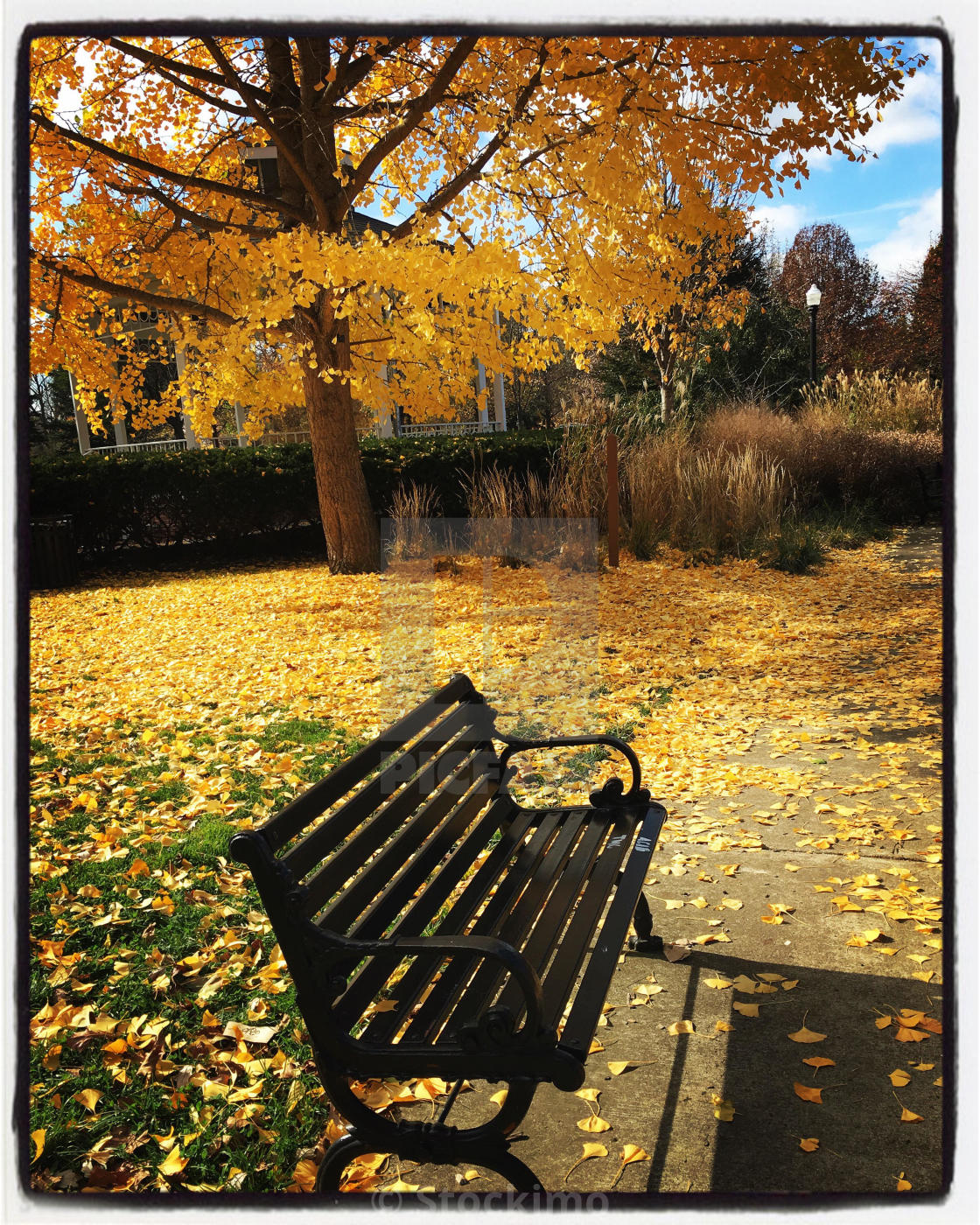 Pleasant Black Park Bench With Yellow Ginkgo Goodale Park Columbus Creativecarmelina Interior Chair Design Creativecarmelinacom