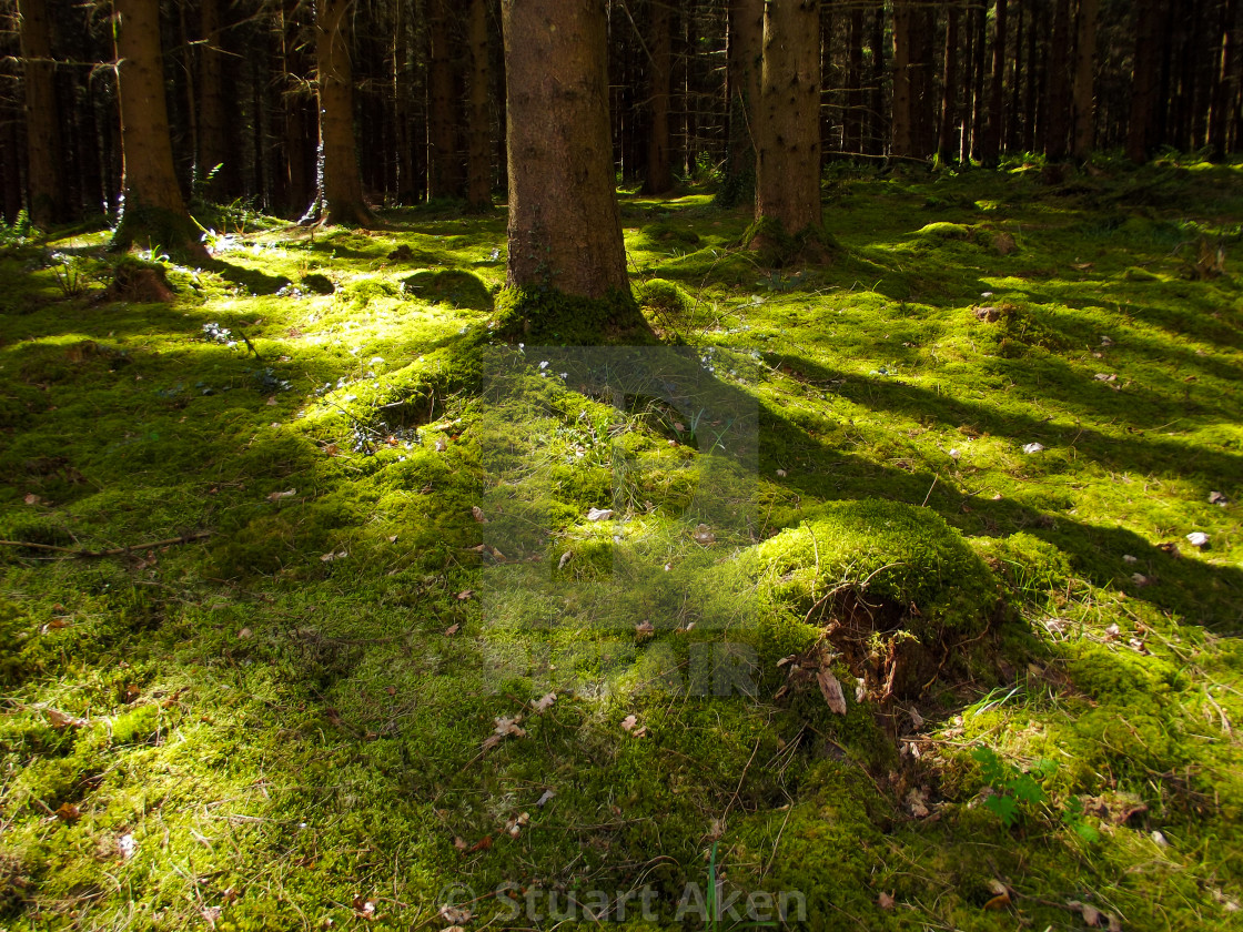 """The Forest Floor"" stock image"