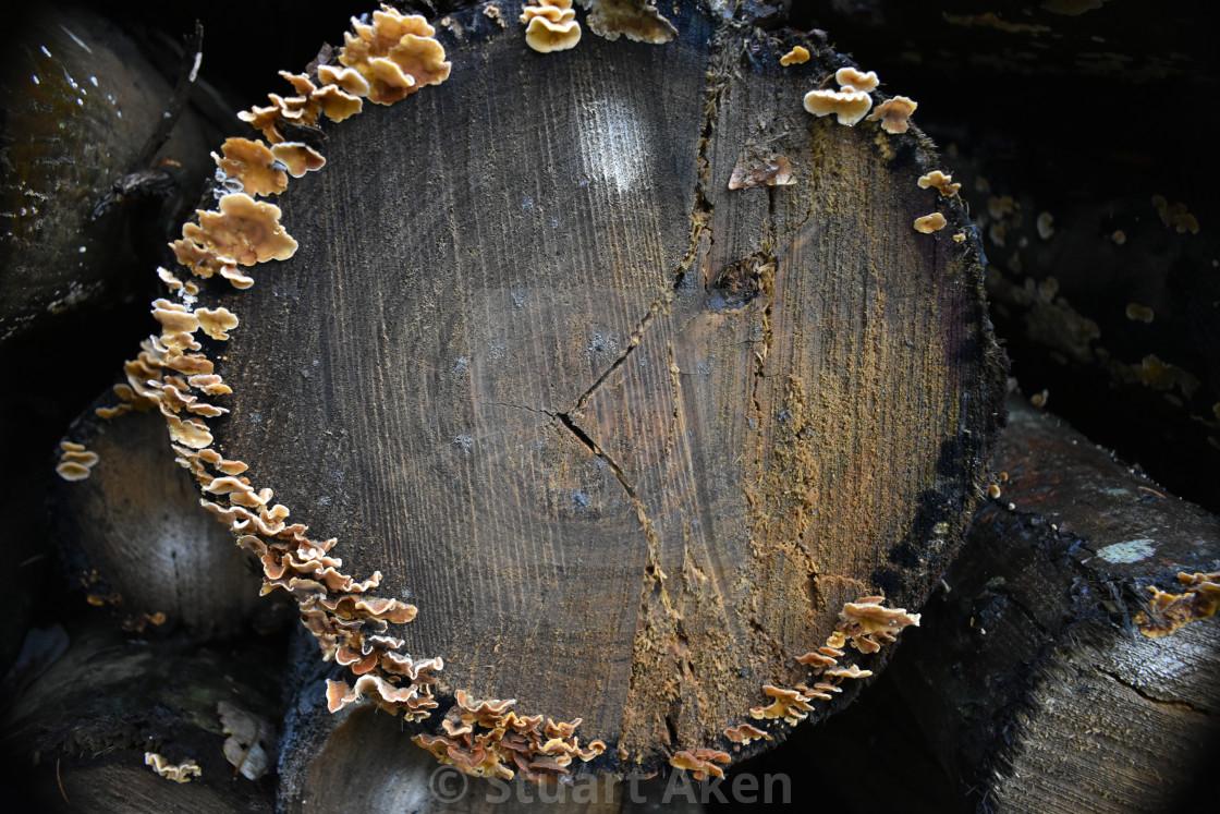 """01 Circle of Fungus"" stock image"