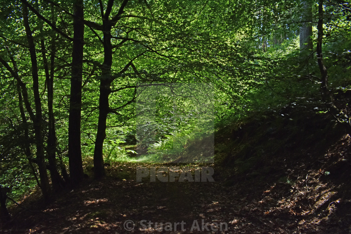 """Forest Shadow"" stock image"