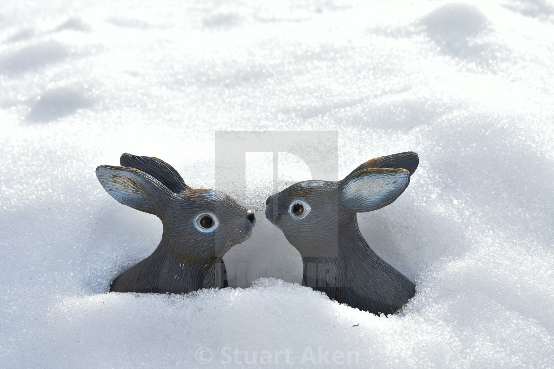 """Bunnies in the Snow"" stock image"
