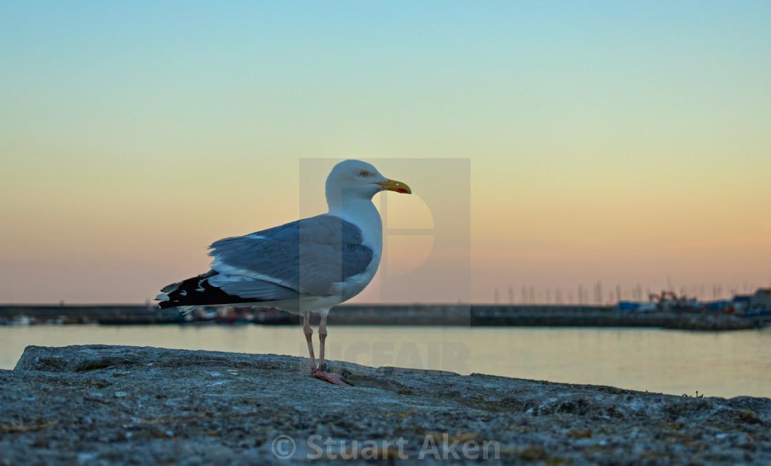 """Gull at Dusk"" stock image"