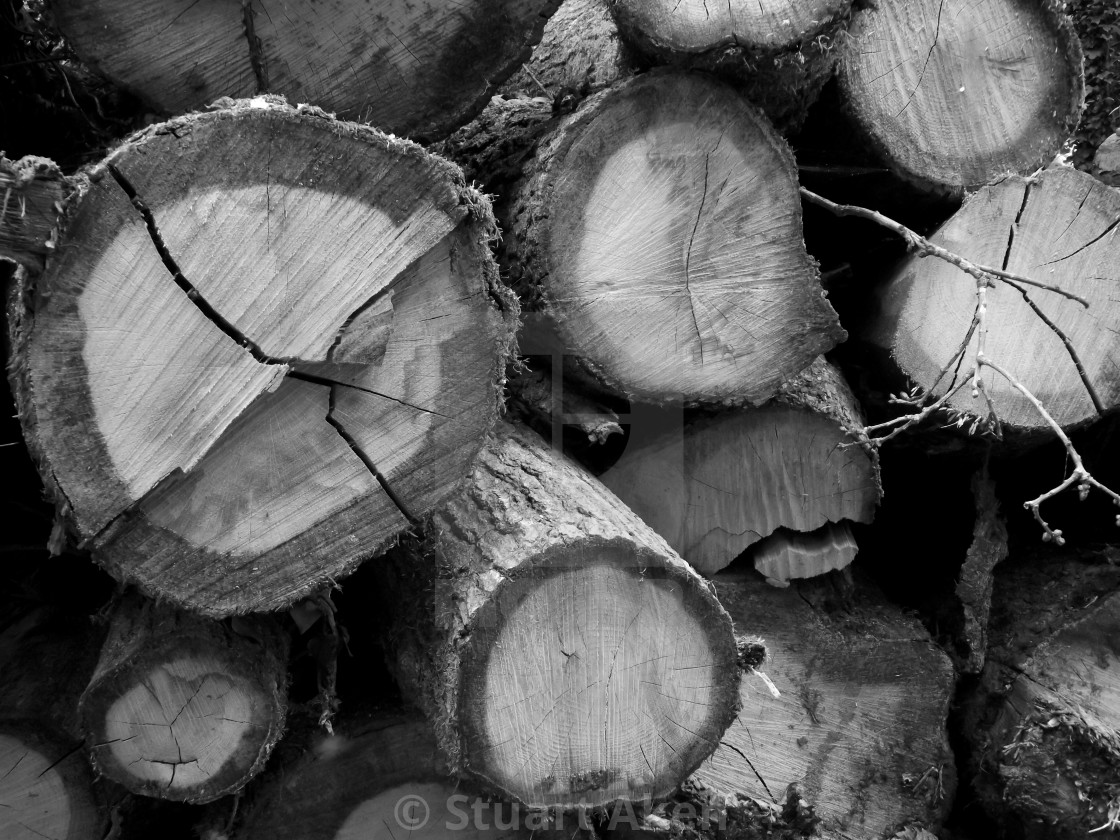 """Timber Stack"" stock image"