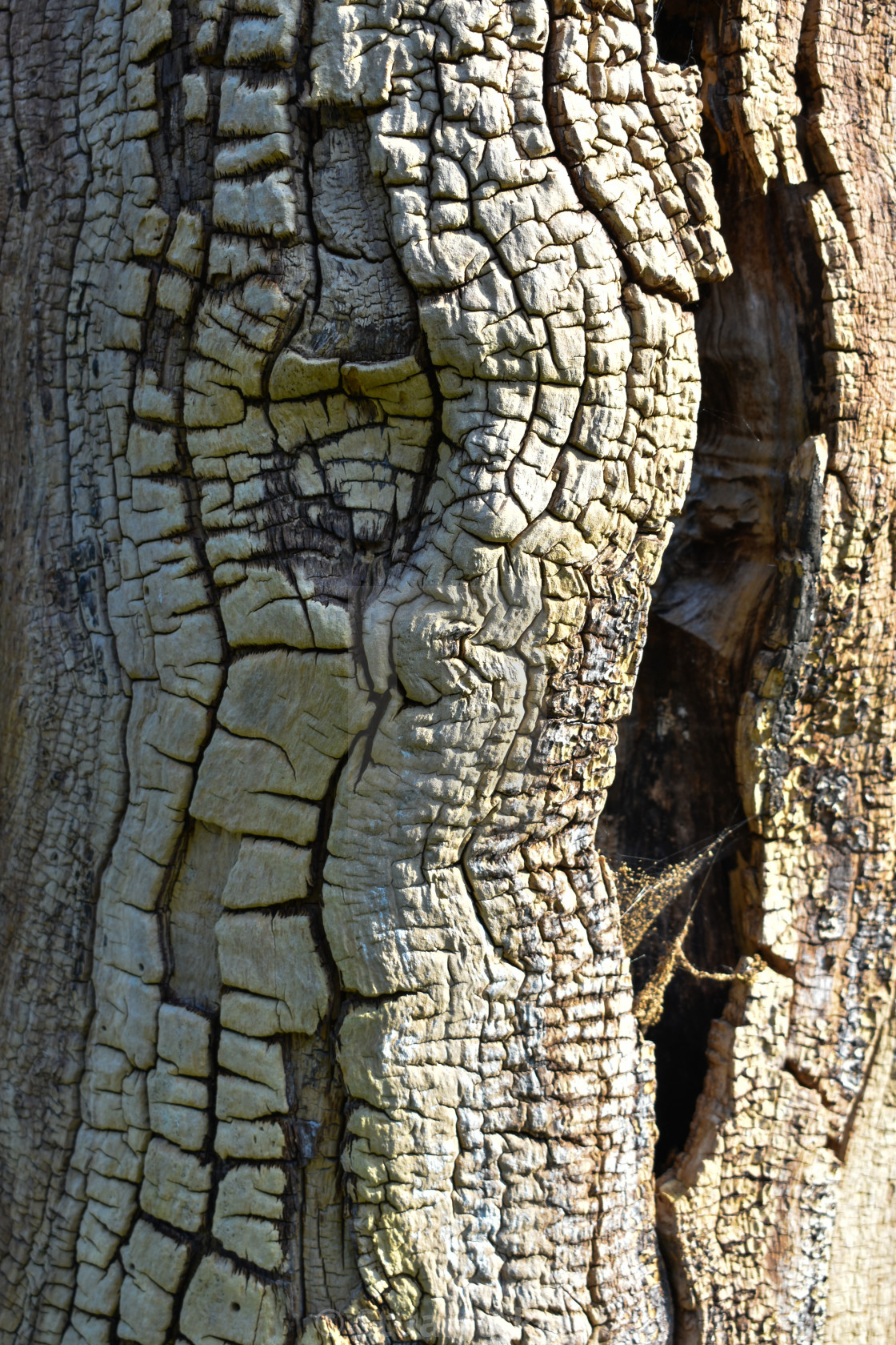"""Ancient Bark"" stock image"