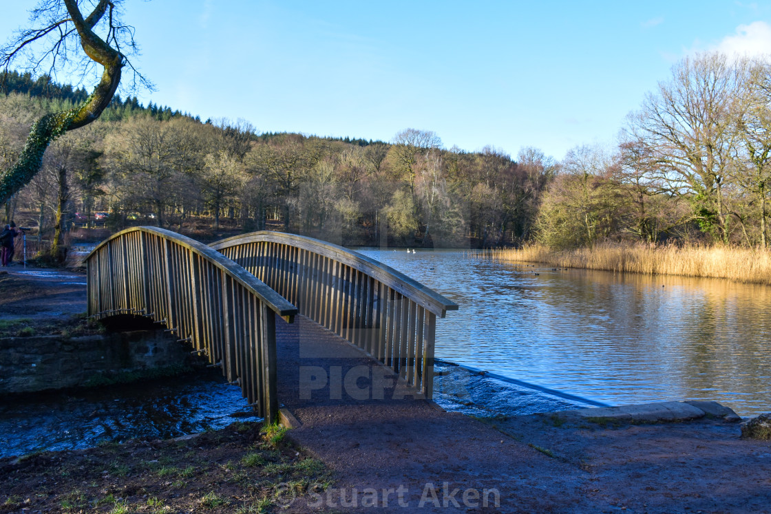"""Arched Bridge at Cannop Ponds"" stock image"