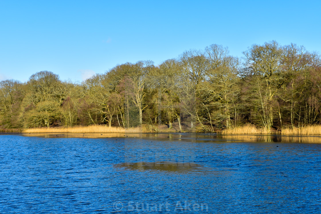 """Cannop Ponds in the Forest of Dean"" stock image"