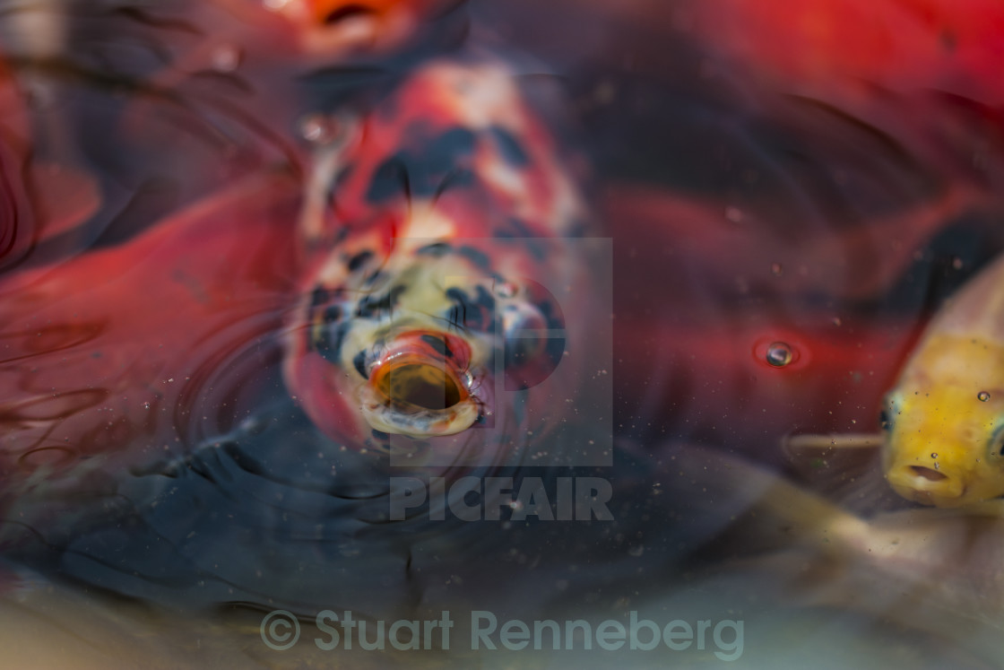 """Shocked Fish"" stock image"