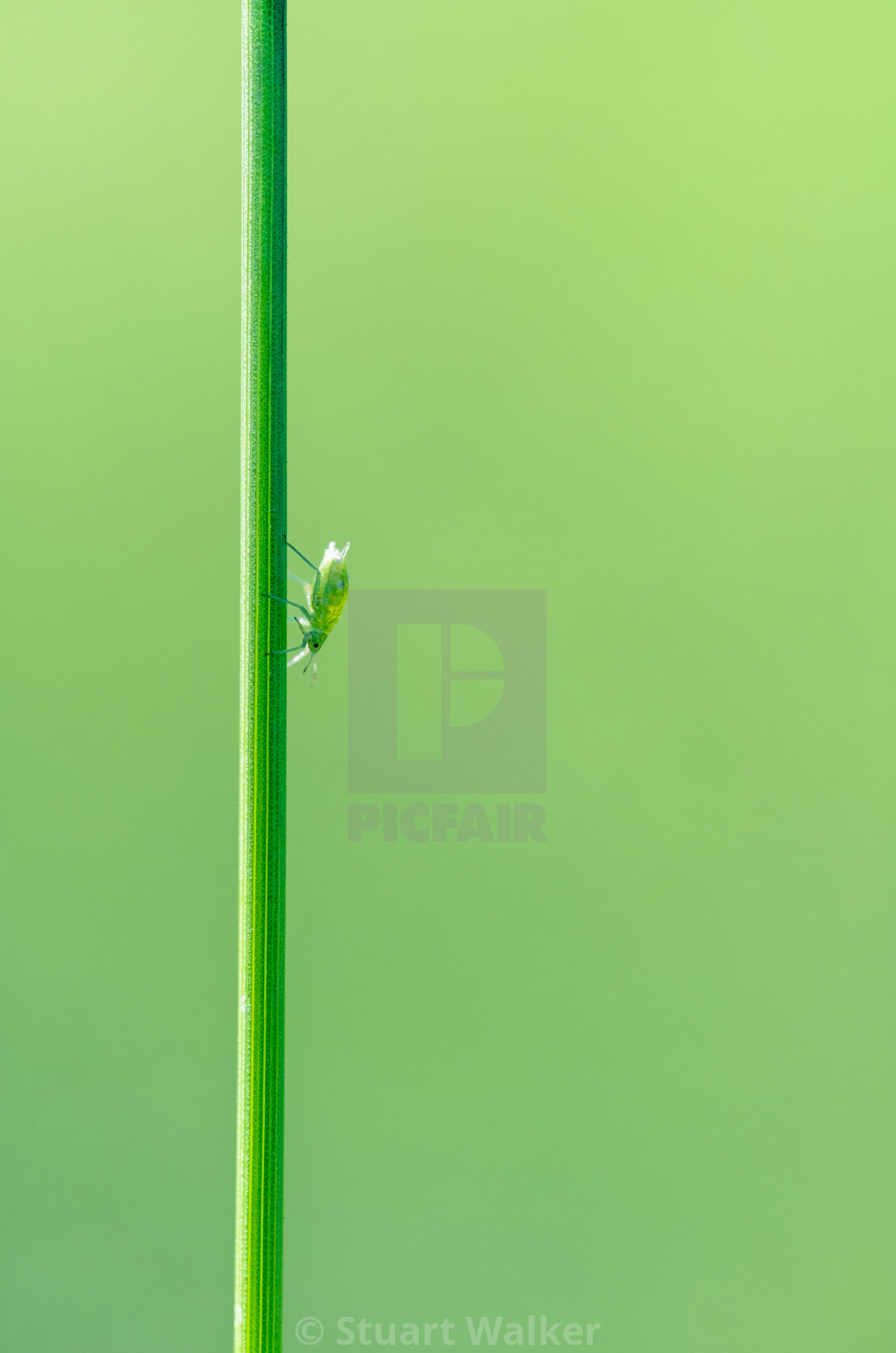 """Everything`s Gone Green"" stock image"