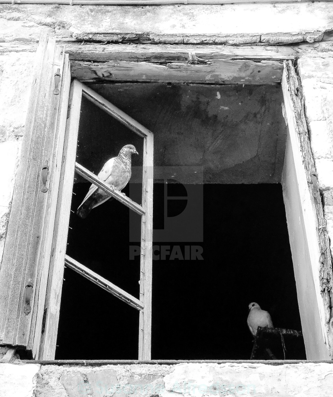 """Pigeon in a window"" stock image"
