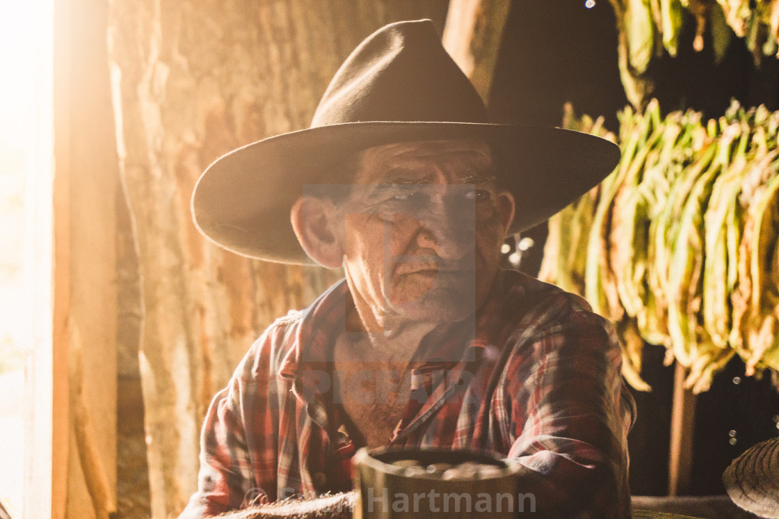 """the tobacco man"" stock image"