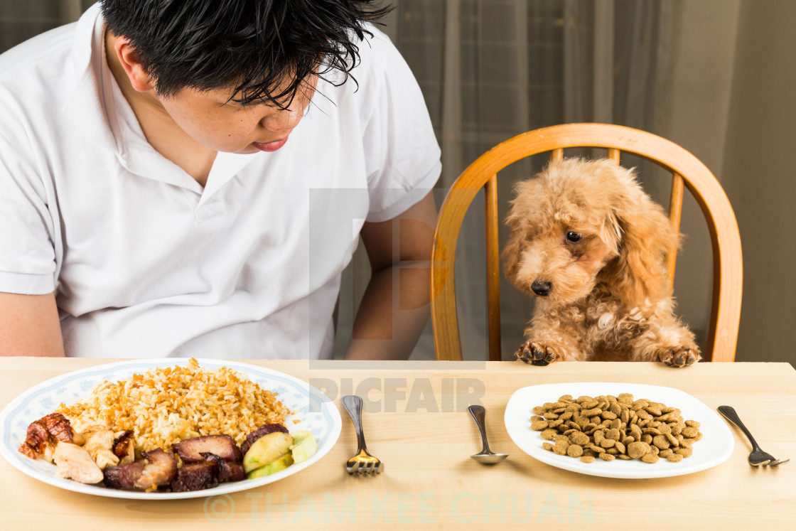 """Puppy eying the plate of rice and meat on a teenager's plate and show no interest on her plate of kibbles"" stock image"