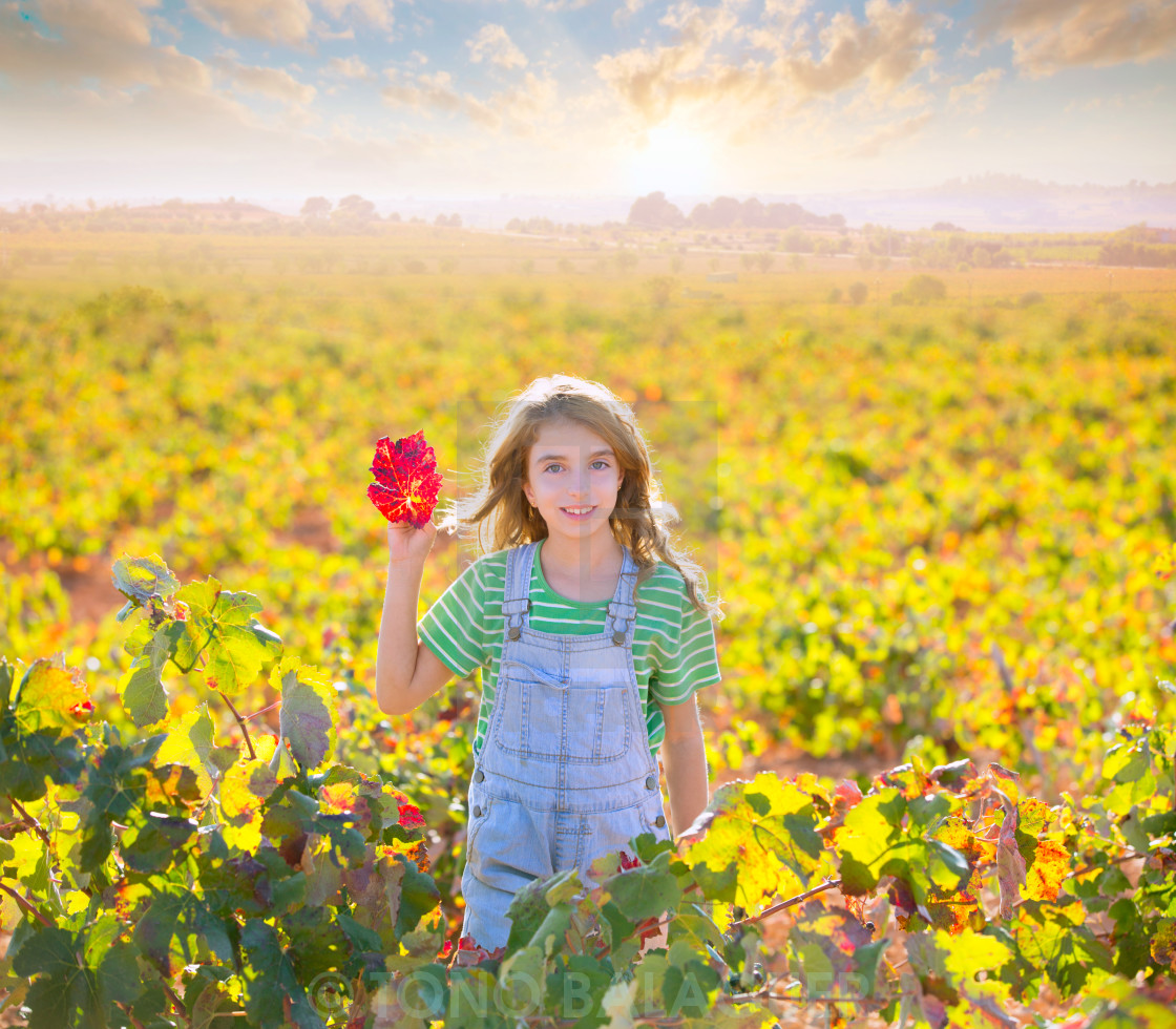 """Kid girl in autumn vineyard field holding hand red leaf"" stock image"