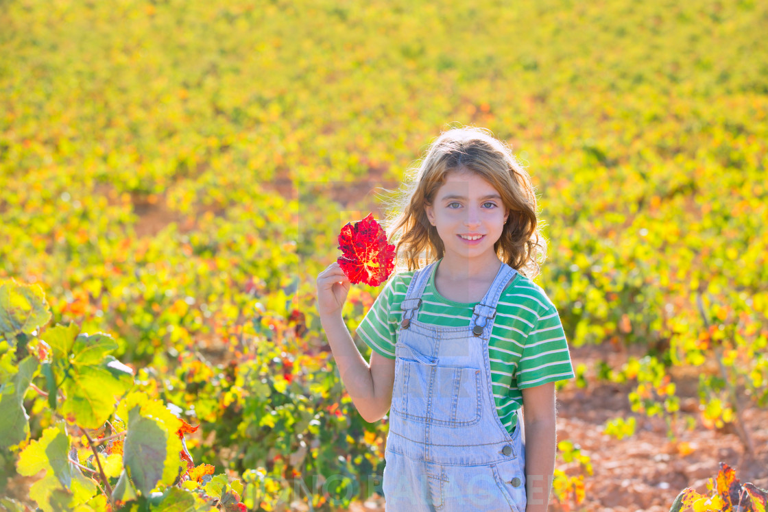 """""""Kid girl in autumn vineyard field holding hand red leaf"""" stock image"""