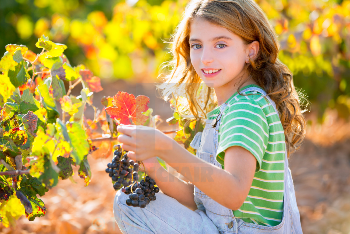 """""""Kid girl smiling autumn vineyard field holding grapes bunch"""" stock image"""
