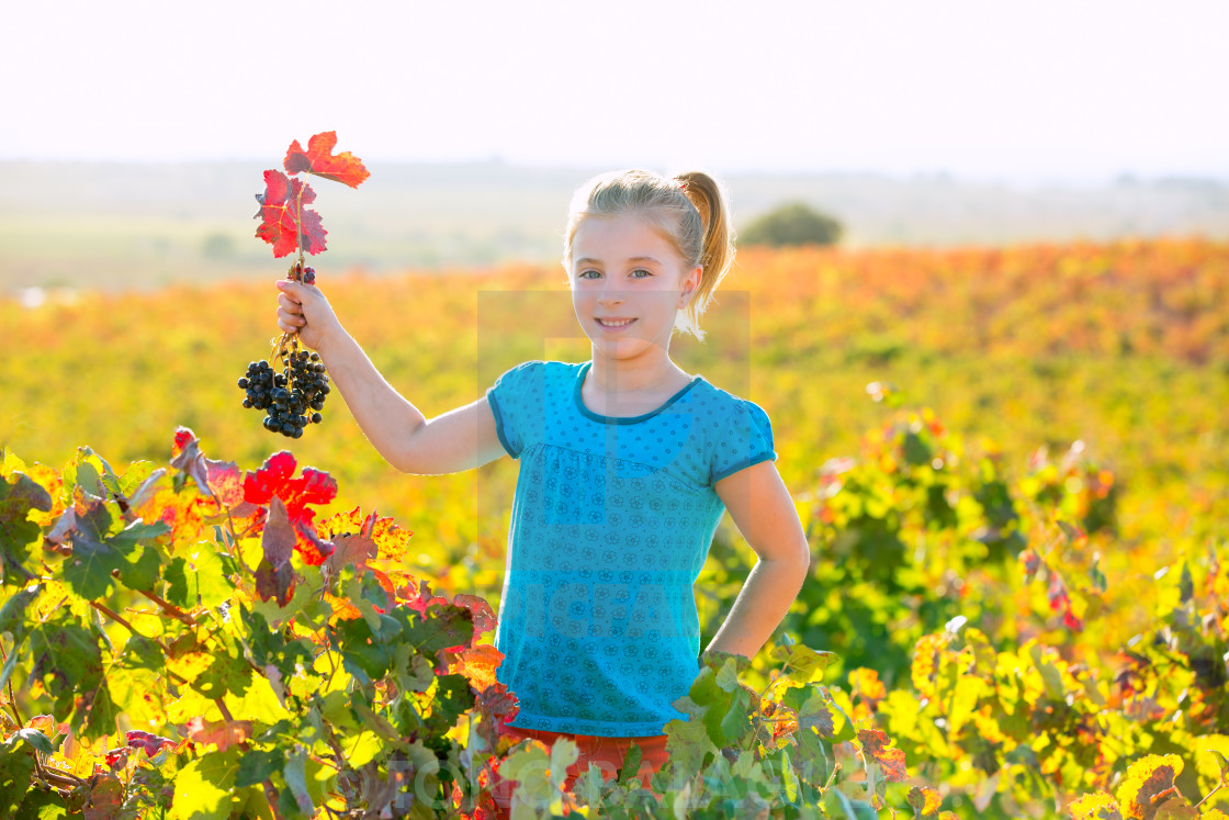 """""""Kid girl in autumn vineyard field holding red grapes bunch"""" stock image"""