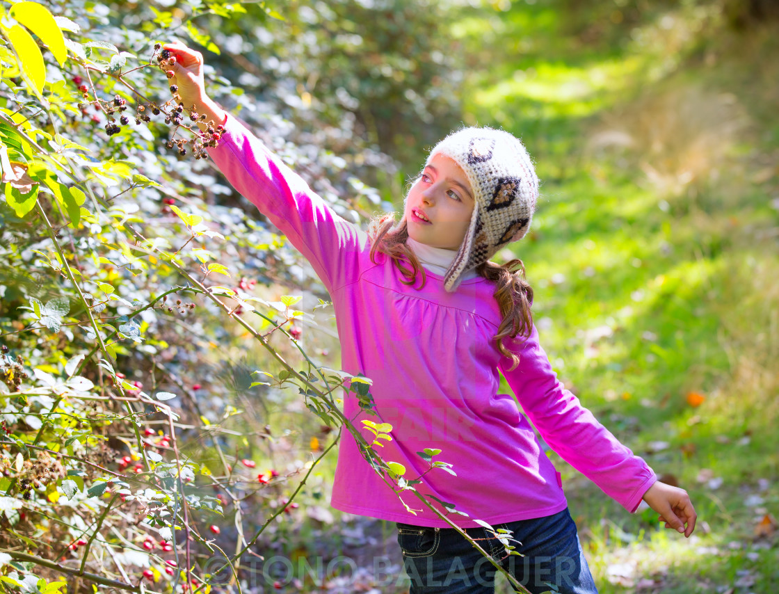 """kid winter girl picking mulberry berries in the forest"" stock image"