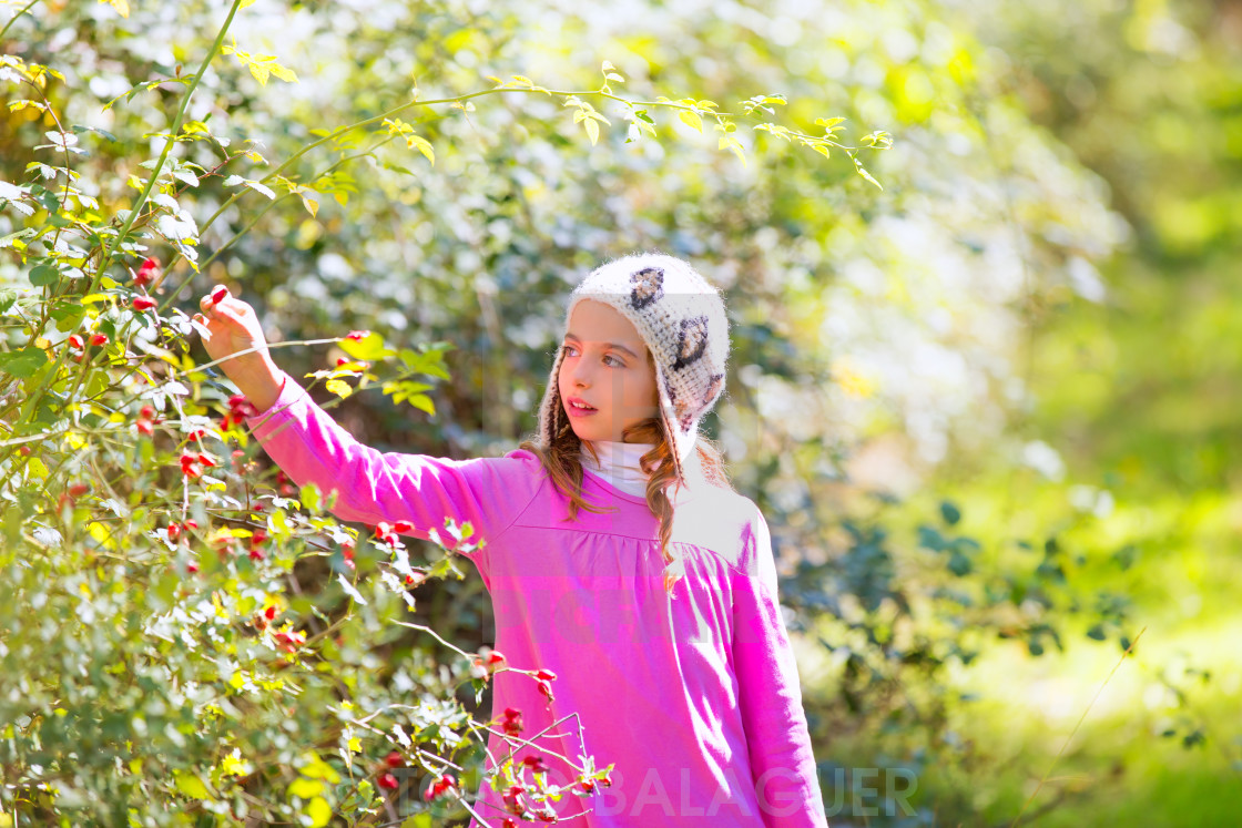 """kid winter girl picking berries in the forest"" stock image"