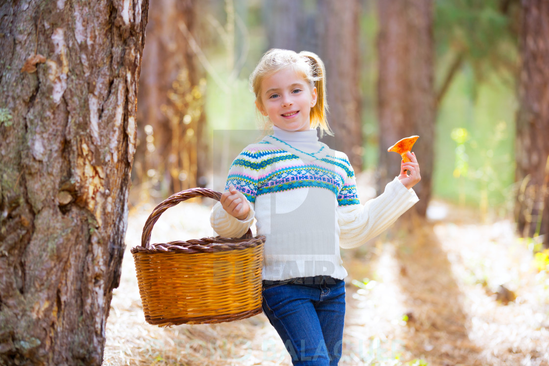 """kid girl searching chanterelles mushrooms with basket in autumn"" stock image"