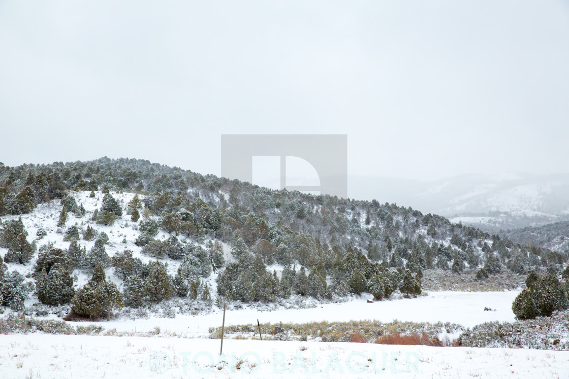 """""""Nevada USA spring snow in the mountains"""" stock image"""