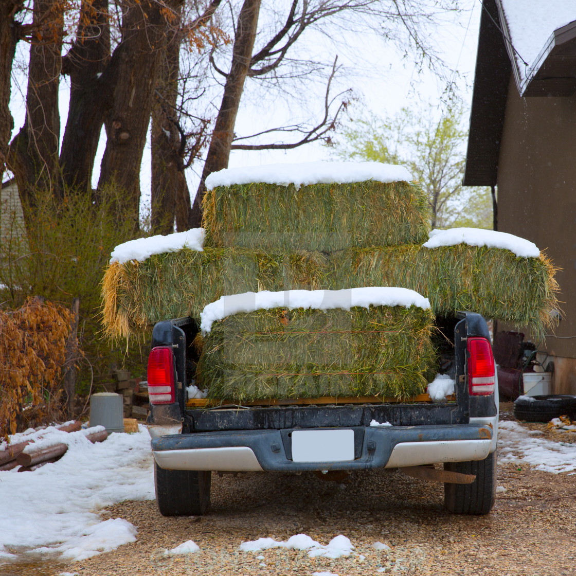 """Snow straw bales truck in Nevada USA"" stock image"