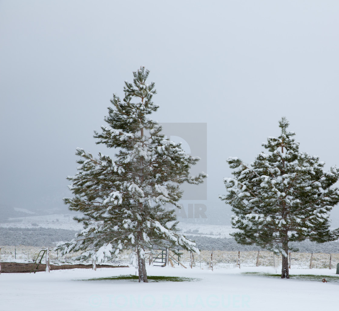 """""""Nevada USA first snow at the park"""" stock image"""
