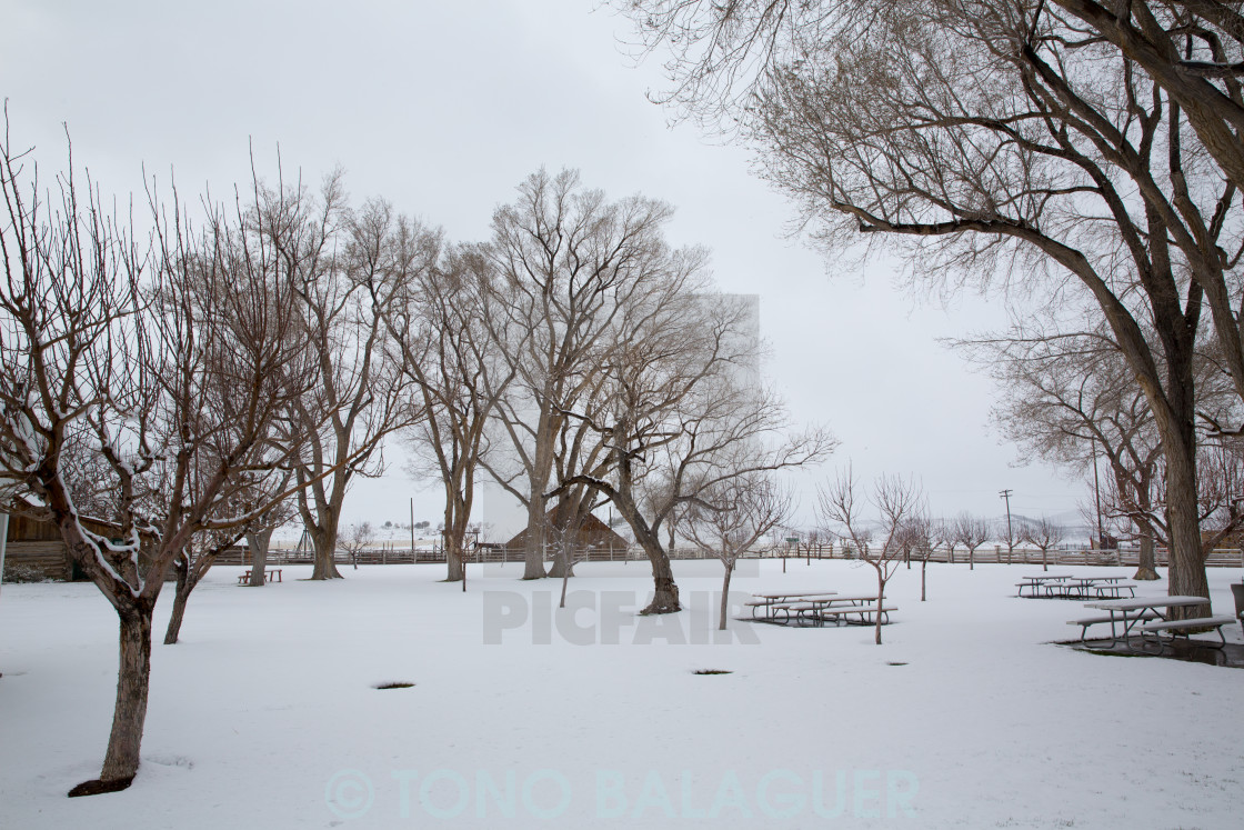"""""""Nevada USA first snow in the park"""" stock image"""