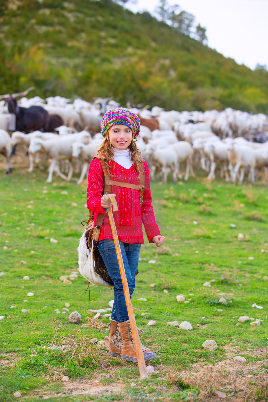 """Kid girl shepherdess happy with flock of sheep and stick"" stock image"