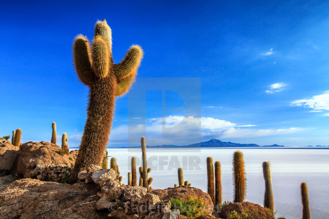 """Isla Incahuasi and Salt Flat of Uyuni"" stock image"