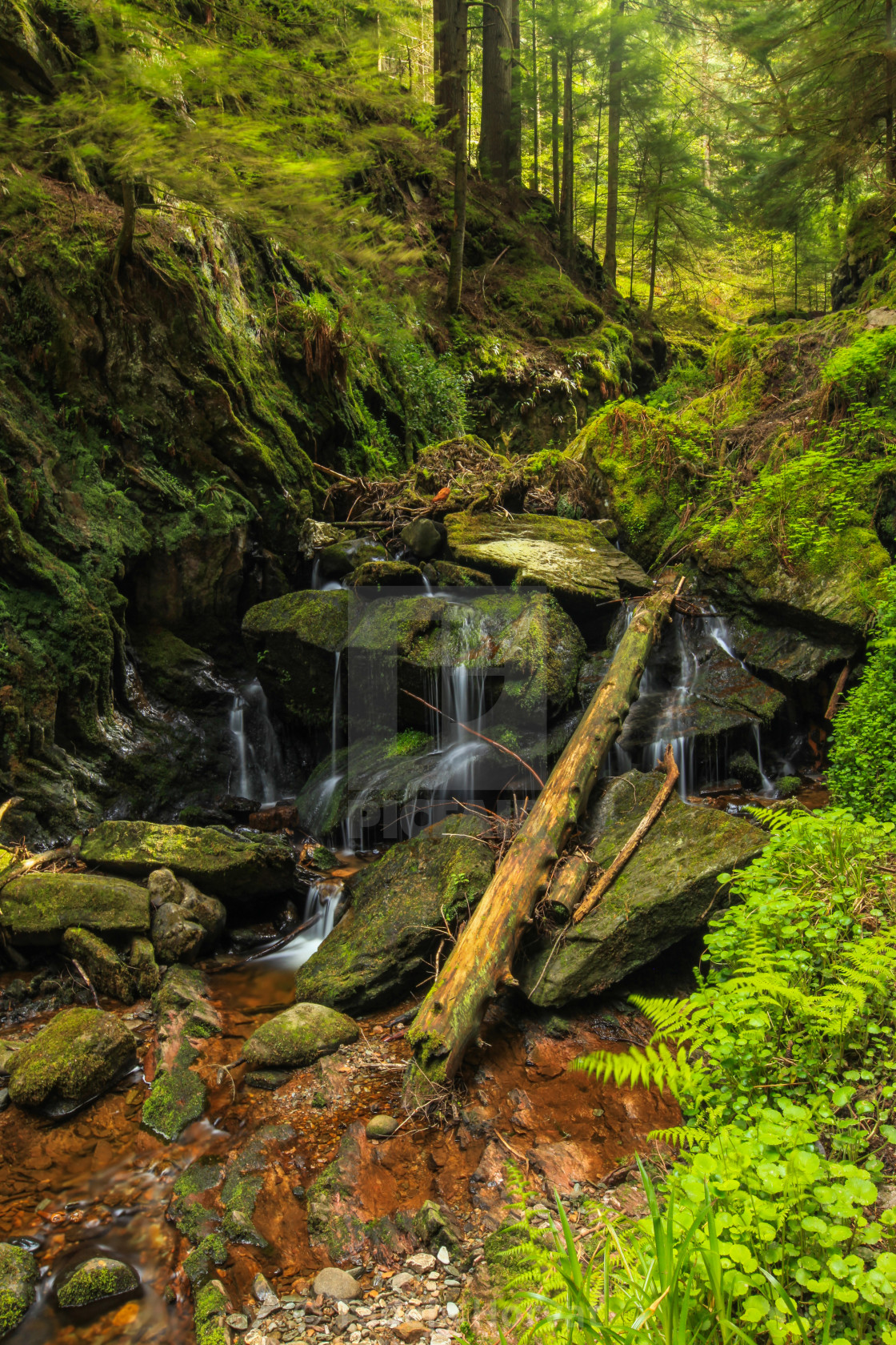 """Puck's Glen"" stock image"